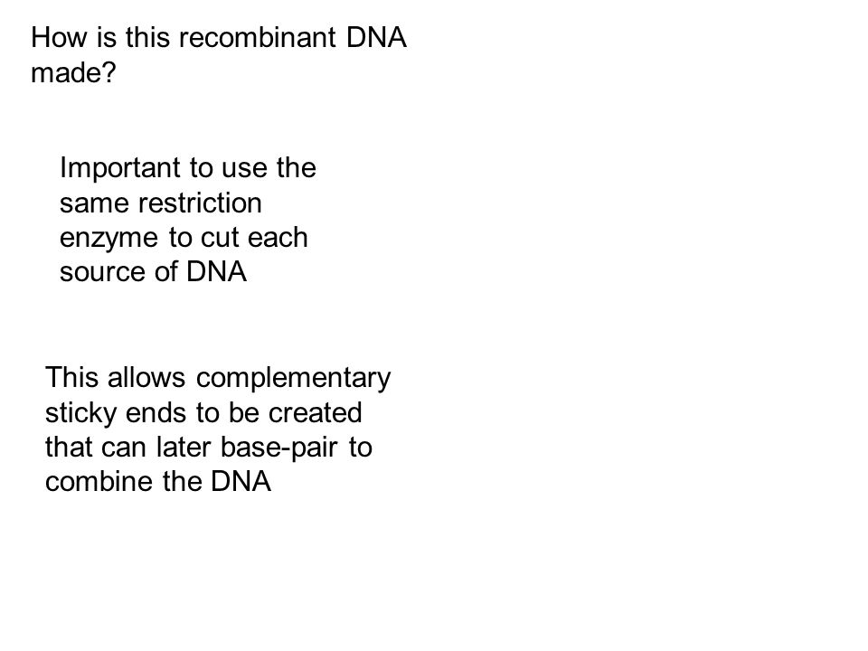 How is this recombinant DNA made