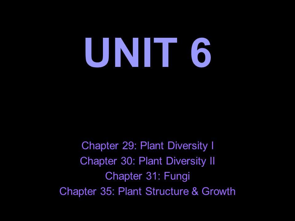 UNIT 6 Chapter 29 Plant Diversity I Chapter 30 Plant Diversity II