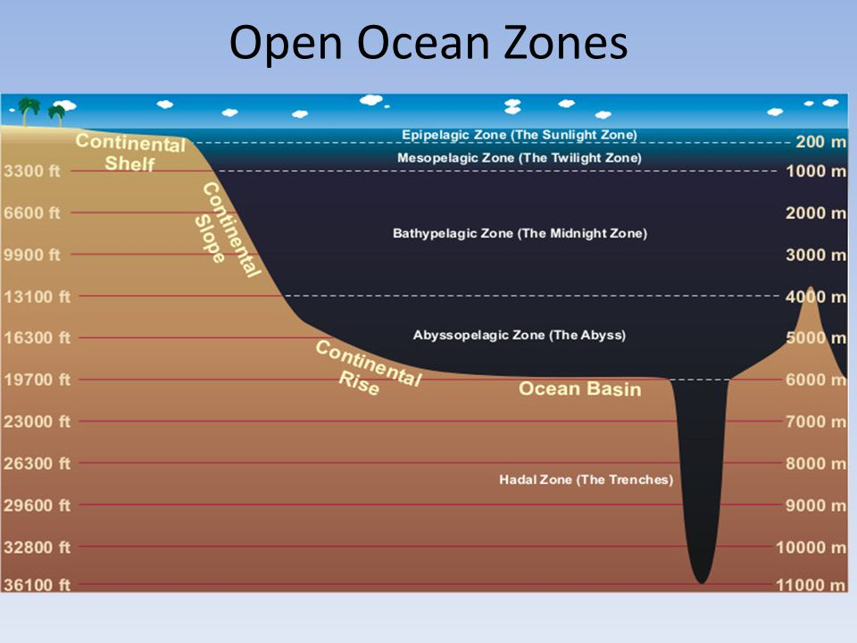 Oceans From wave to wave…. - ppt download