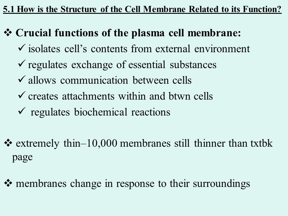 how is the structure of cells related to their function essay Investigating the structure and function  related essays: the structure and function of  membrane structure and function biology essay  structure and function.