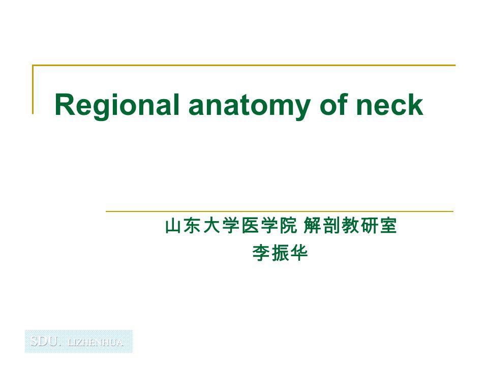 Regional Anatomy Of Neck Ppt Video Online Download