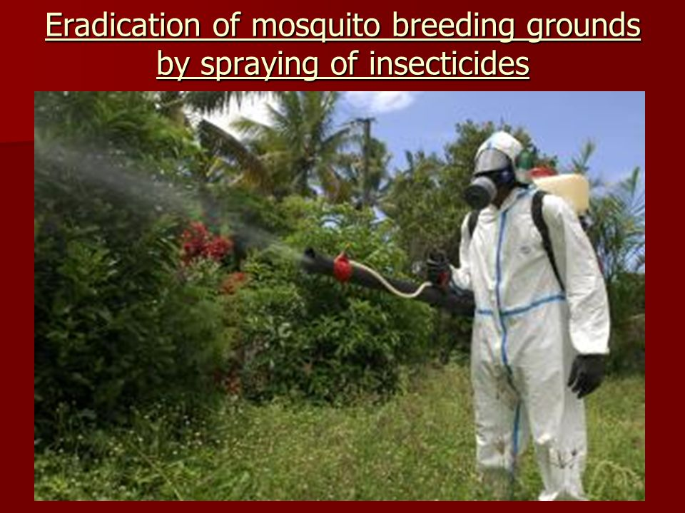 Eradication of mosquito breeding grounds by spraying of insecticides