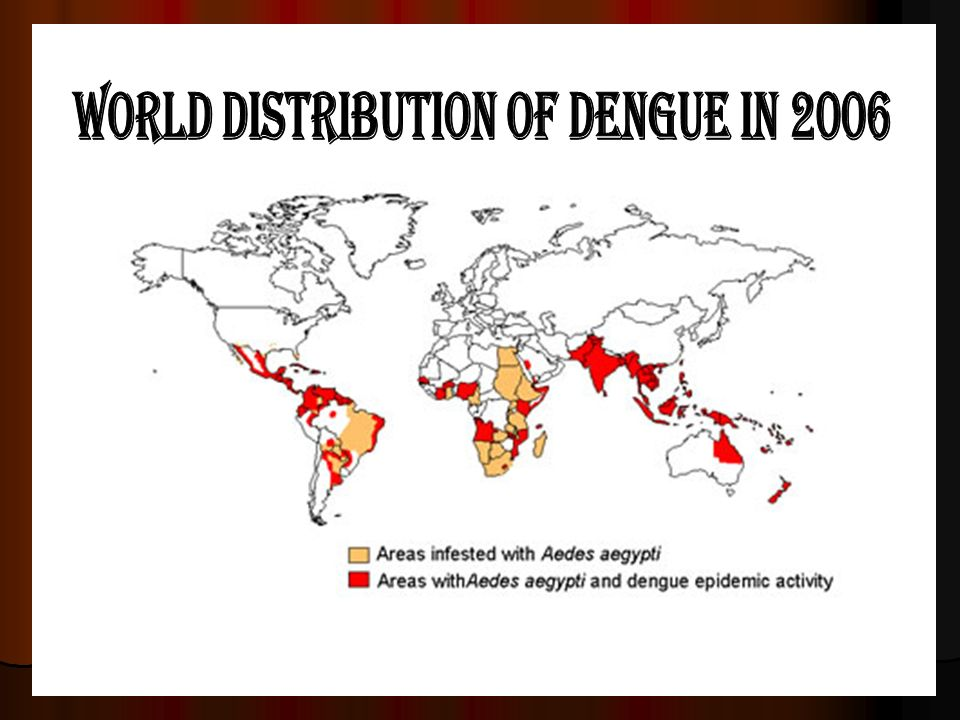 world distribution of dengue in 2006