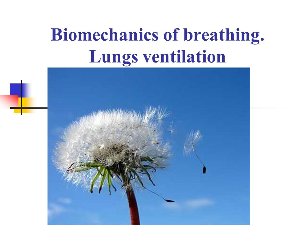 Biomechanics of breathing. Lungs ventilation