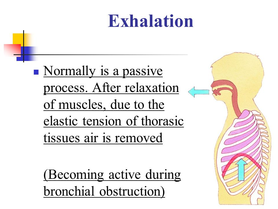 Exhalation Normally is a passive process. After relaxation of muscles, due to the elastic tension of thorasic tissues air is removed.
