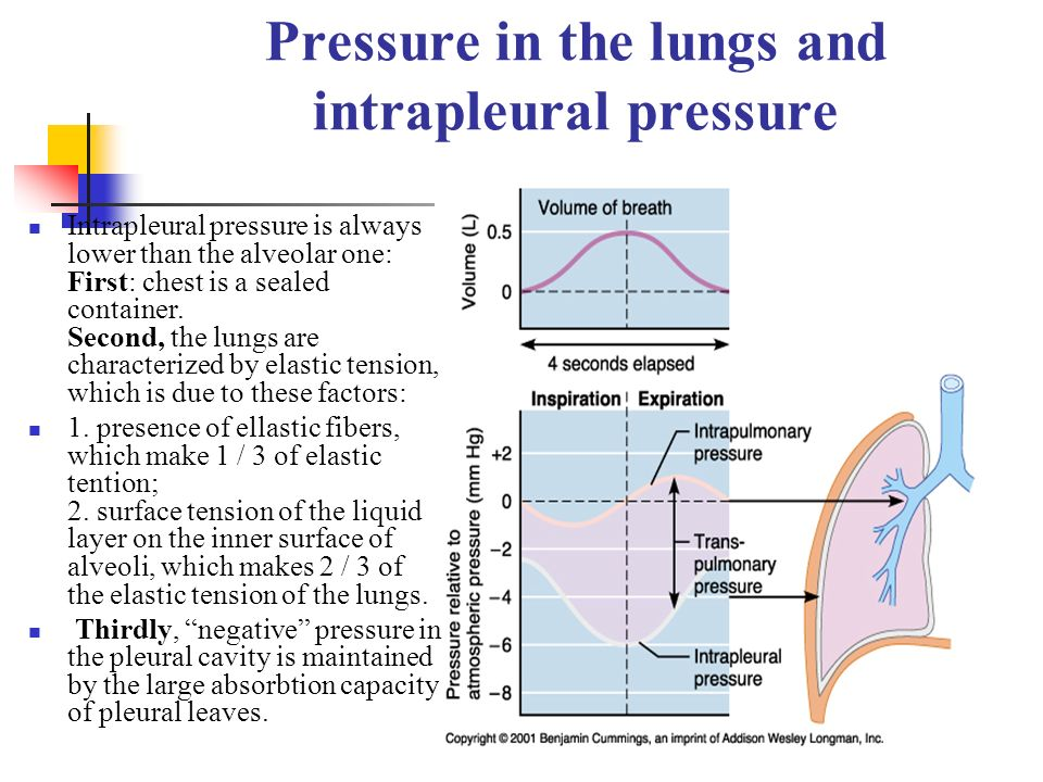 Pressure in the lungs and intrapleural pressure