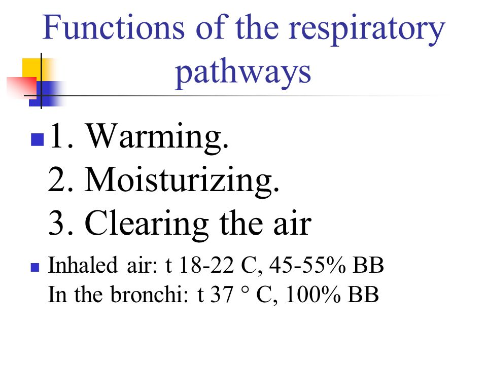 Functions of the respiratory pathways