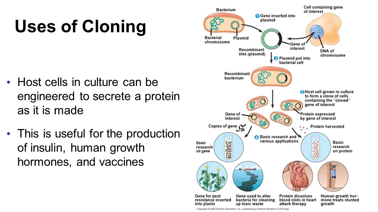 recombinant therapeutic cloning essay In standard cloning protocols  hgh for therapeutic use was obtained from pituitary recombinant dna molecules and recombinant proteins are usually not regarded.