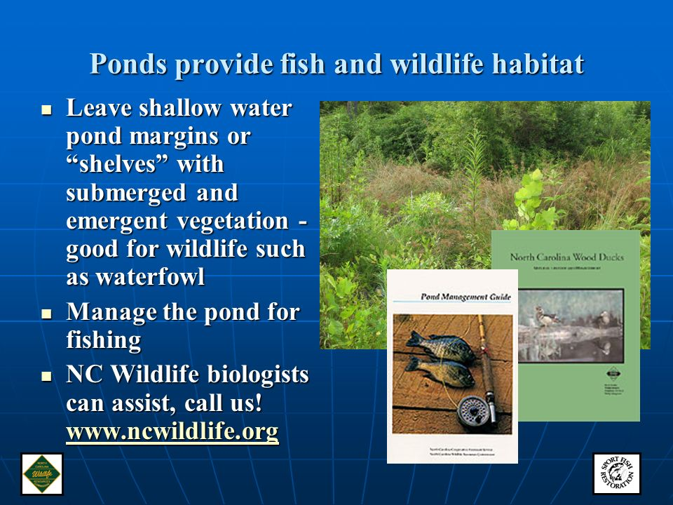 Farm ponds and fish and wildlife ppt video online download for Nc fish and wildlife