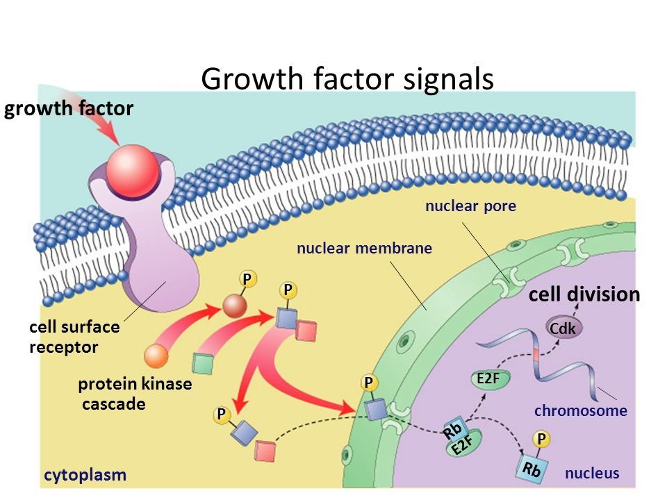 how to find growth factor