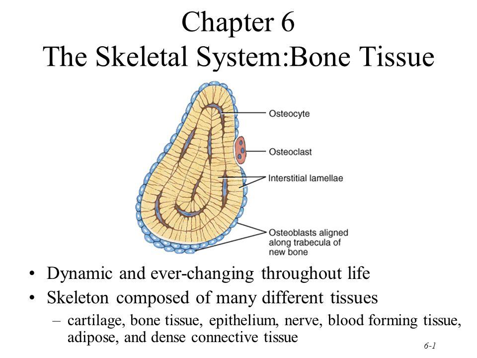 1 skeletal system and bone Term paper Help kjtermpaperzlrj.buycurio.us
