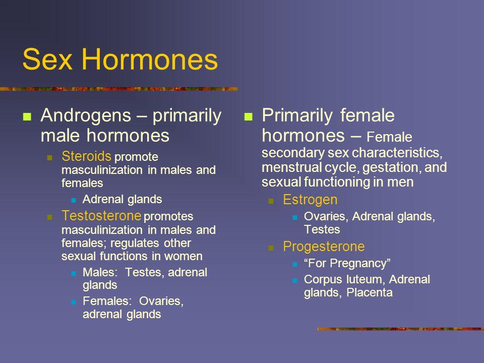 Sex Hormones Androgens – primarily male hormones