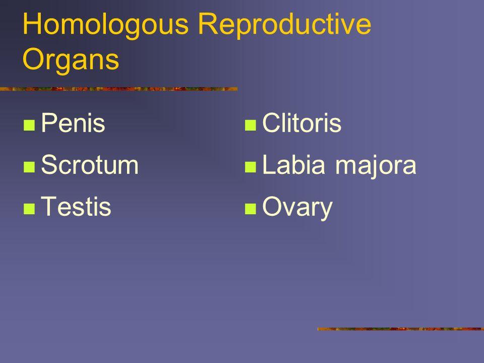 Homologous Reproductive Organs