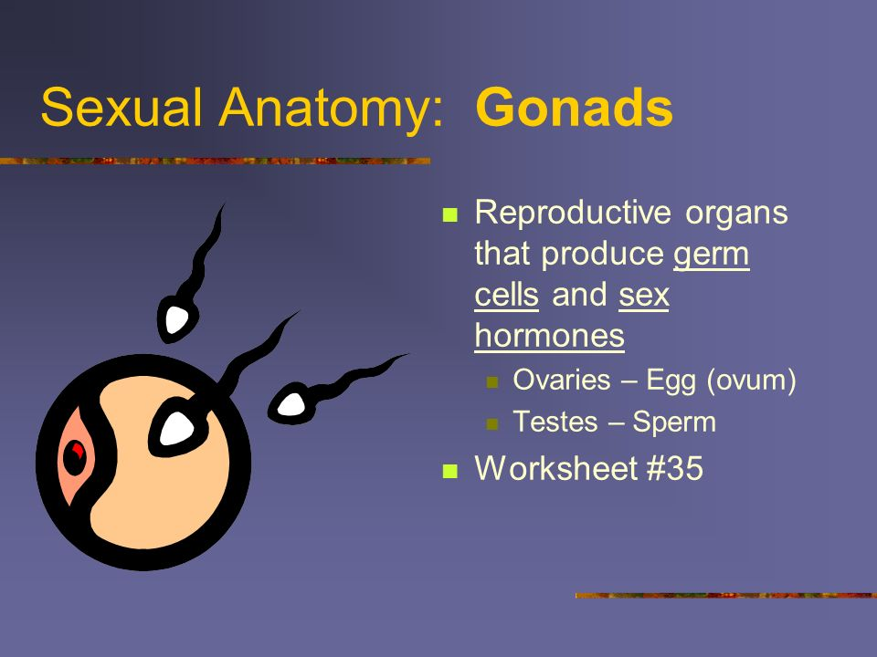 Sexual Anatomy: Gonads