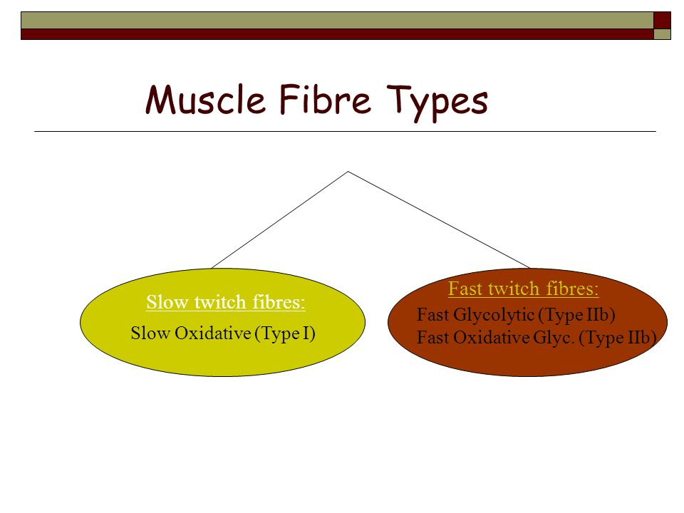Muscle structure and function ppt video online download - Tous types ou tout type ...