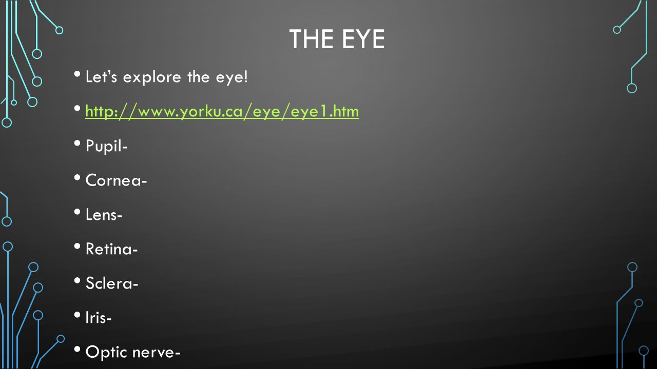 The Eye Let's explore the eye!   Pupil-