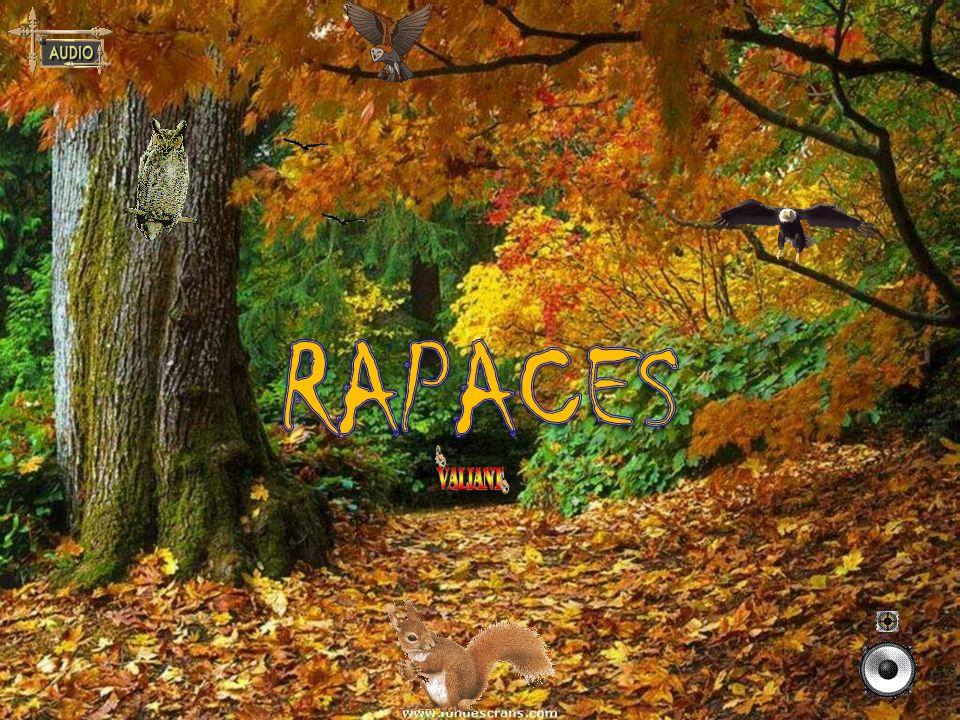 RAPACES