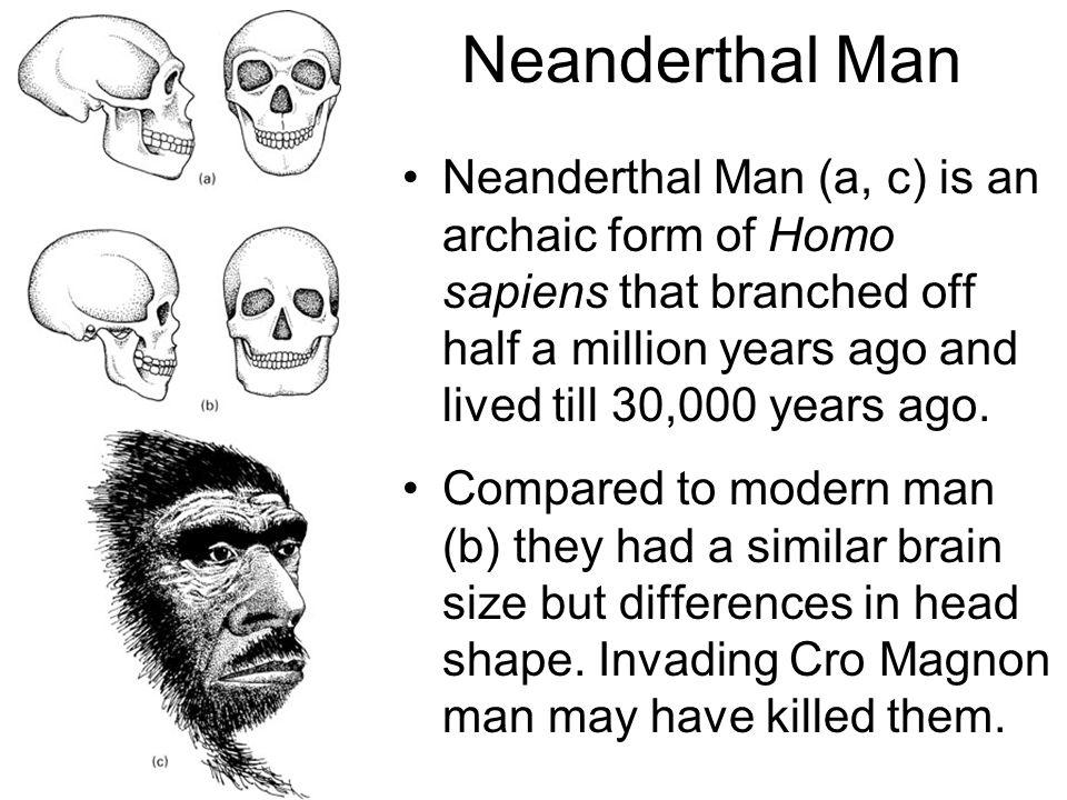 neandertalerne og homo sapiens