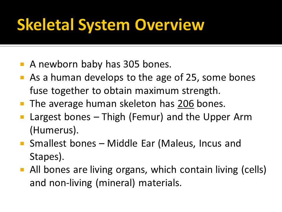 skeletal system. - ppt download, Skeleton