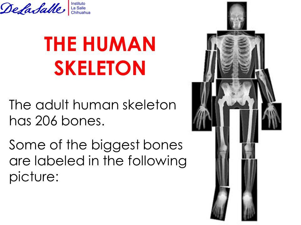 the skeletal system. - ppt download, Skeleton