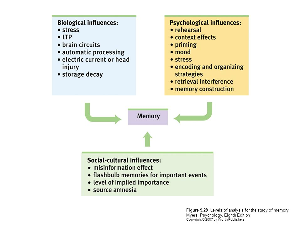 an analysis of learning and memory Memorization versus understanding memory is a fundamental tool in the learning process we are taught from a young age to develop our memorization skills.