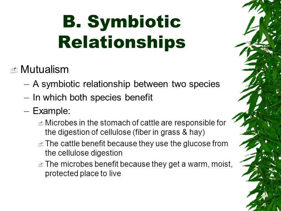 example of symbiotic relationship