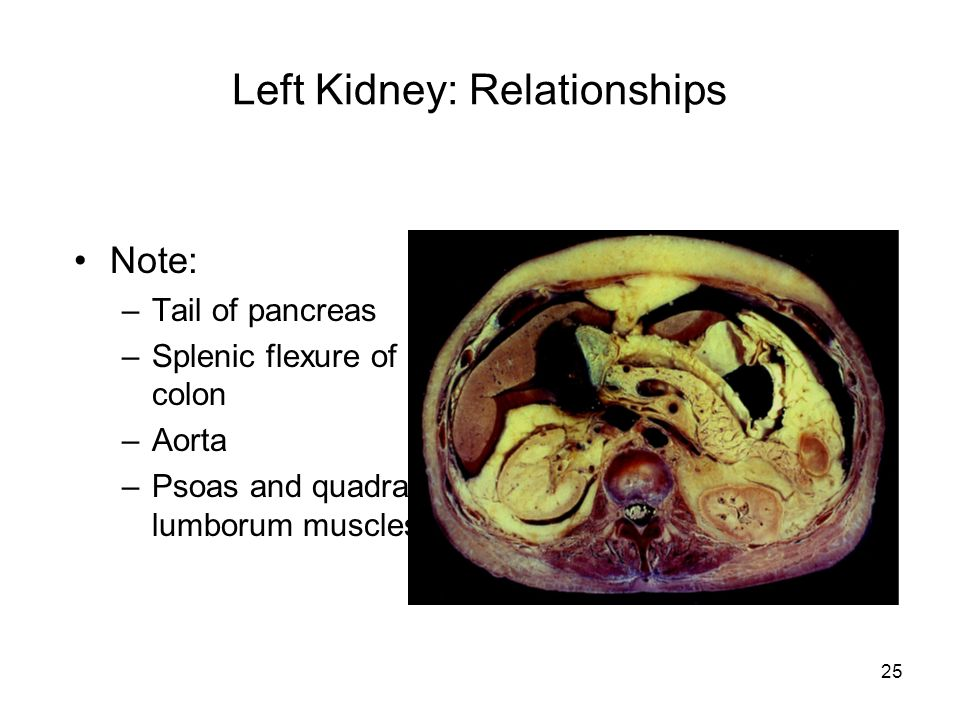 kidney and pancreas relationship