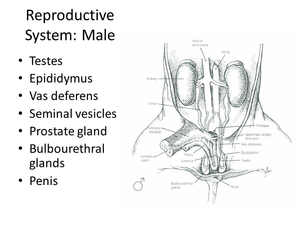 Seriously Awesome Dissection Site Ppt Download