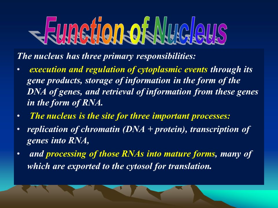 function of the nucleus biology essay Essays from bookrags provide great ideas for cell (biology) essays and paper topics like essay a nucleus has a function to control headquarters in the control.