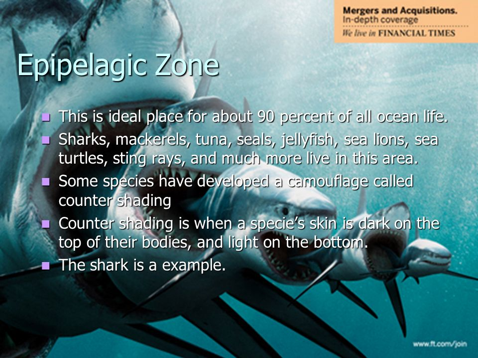 Animal life in the ocean ppt video online download epipelagic zone this is ideal place for about 90 percent of all ocean life sciox Gallery