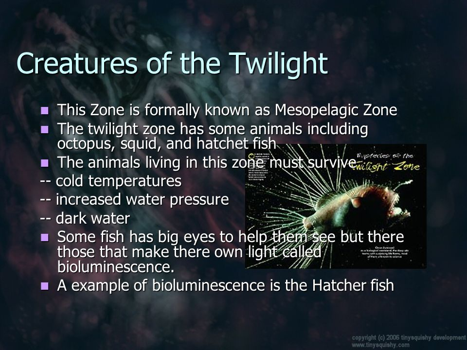 Animal life in the ocean ppt video online download for Twilight zone fish