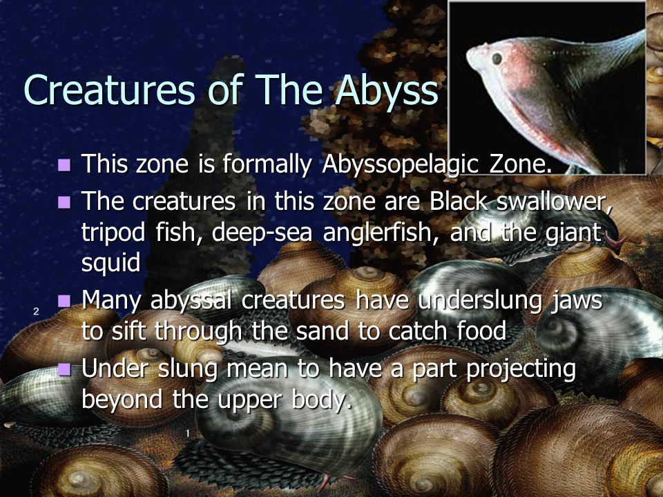 Animal life in the ocean ppt video online download creatures of the abyss this zone is formally abyssopelagic zone sciox Gallery