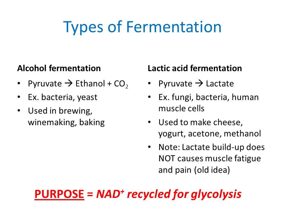 AP Bio Exam Review: Cell Energy (Respiration ...