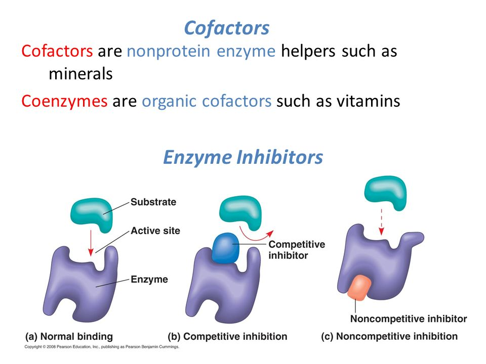 an examination of enzymes Enzymes are special types of proteins like all proteins, enzymes are made from strings of amino acids the function of the enzyme is determined by the sequence of amino acids, types of amino acids, and the shape of the string what do enzymes do enzymes are responsible for a lot of the work that.