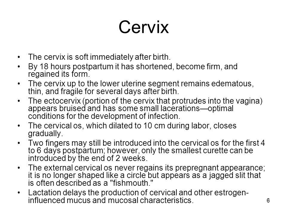 Cervix The cervix is soft immediately after birth.