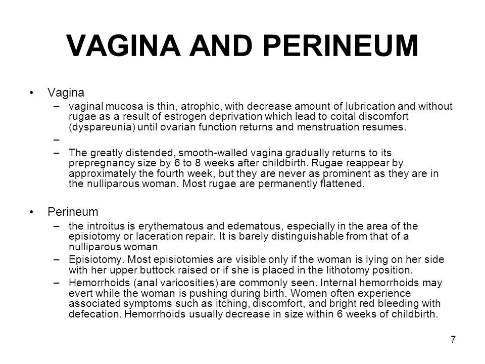 VAGINA AND PERINEUM Vagina Perineum
