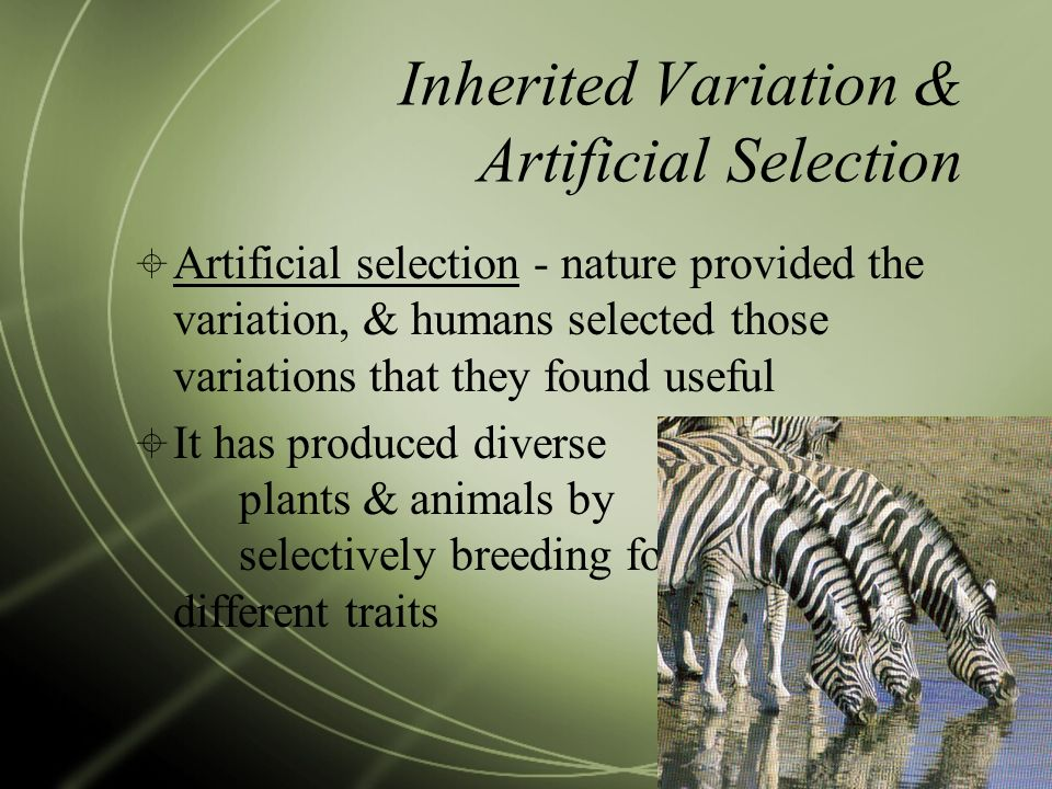 Inherited Variation & Artificial Selection