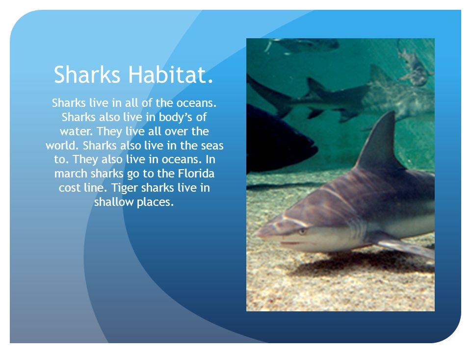 Shark Attack! by Mark Chklovskii. - ppt video online download