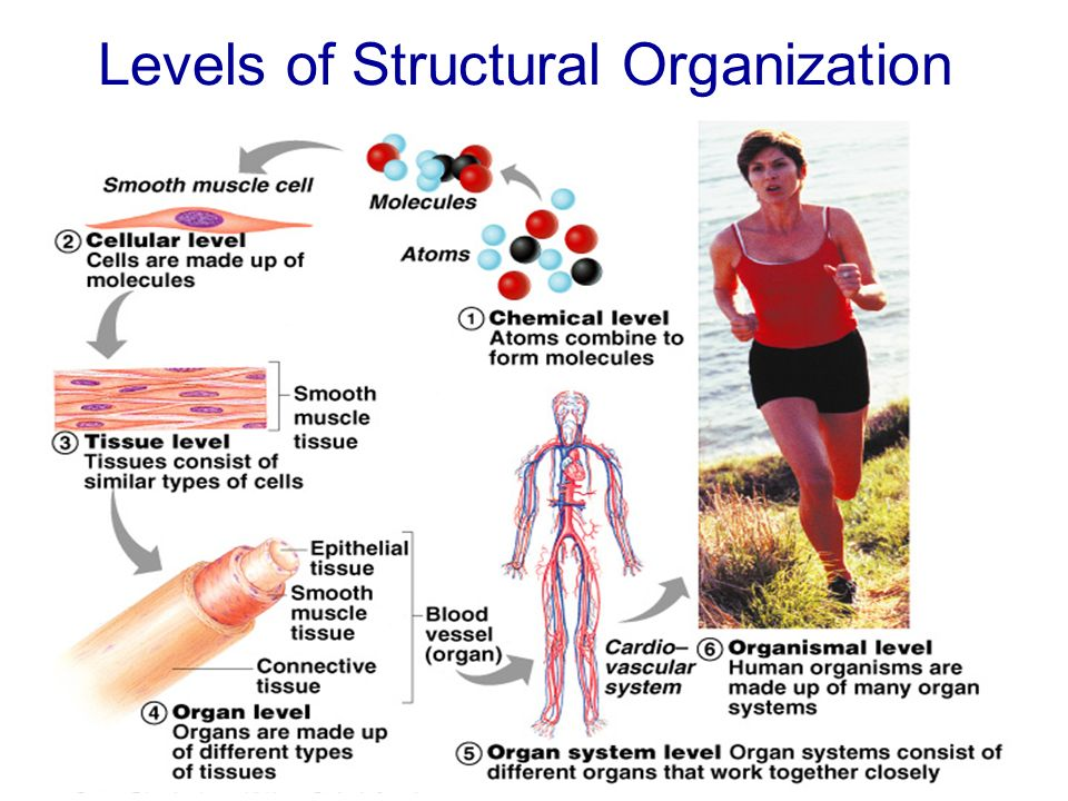 The Human Body – An Orientation - ppt download