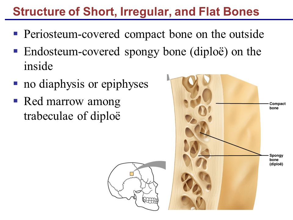 bone structure Use the bone diagram to answer the question watch the video then answer the questionsclick here to watchif you cannot watch, use the information below a.