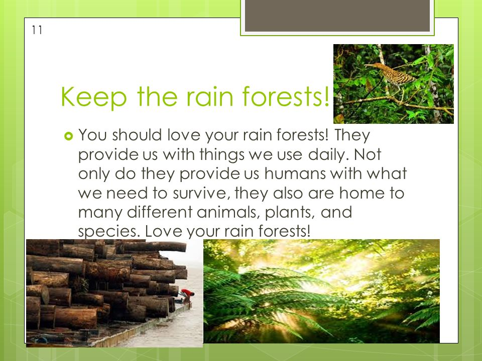 Tropical rain forest biome ppt video online download for What do we use trees for