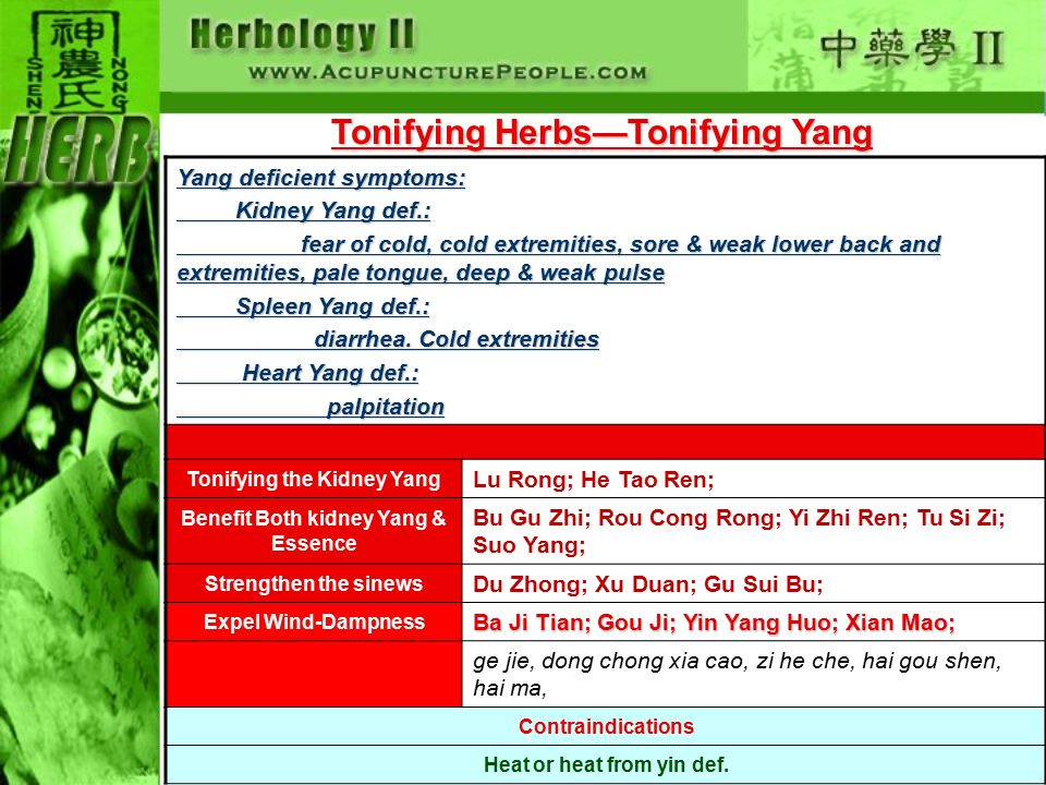 Tonifying Herbs—Tonifying Yang