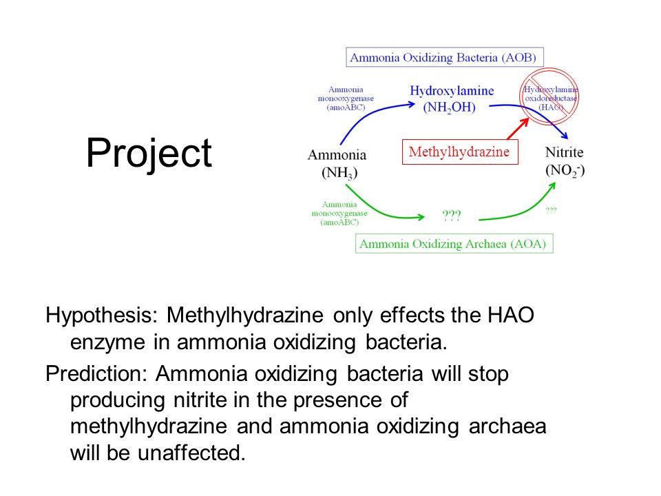 ammonia oxidizing bacteria Ammonia oxidizing bacteria community dynamics in a pilot-scale wastewater treatment plant xiaohui wang, xianghua wen, yu xia, ma hu, fang zhao, kun ding.