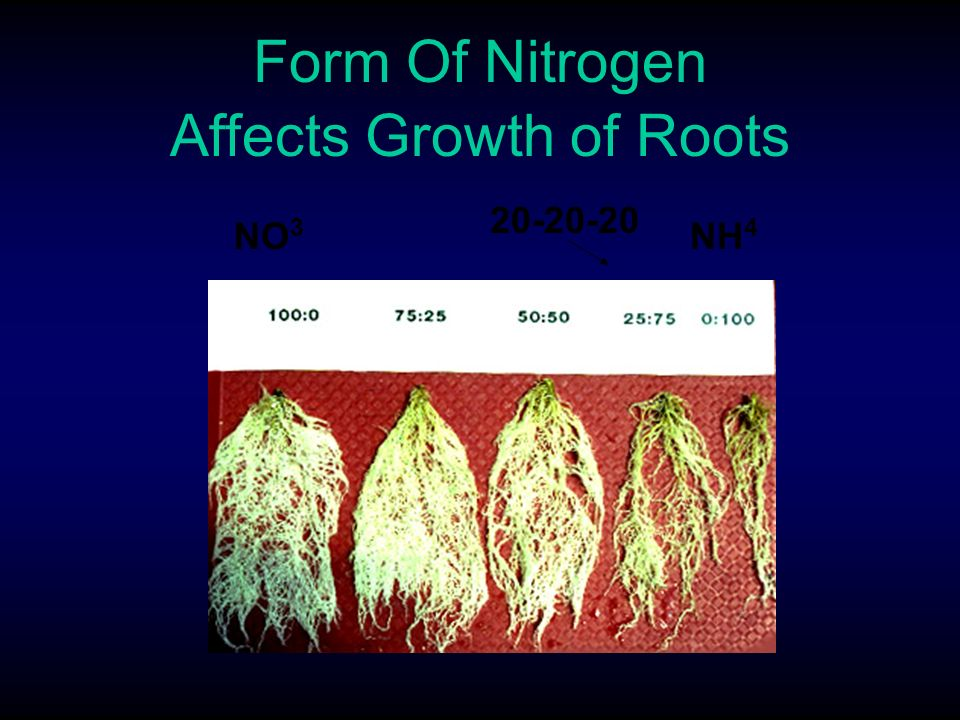effect of nitrogen on plant growth Transcript of the effects of fertilizer on plant growth   amounts by the plant most common: nitrogen  has a positive effect on plant growth, and that by adding .