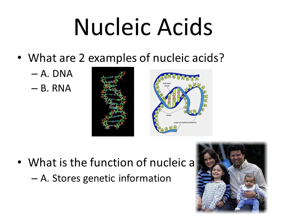 Functions of nucleic acids essay about myself