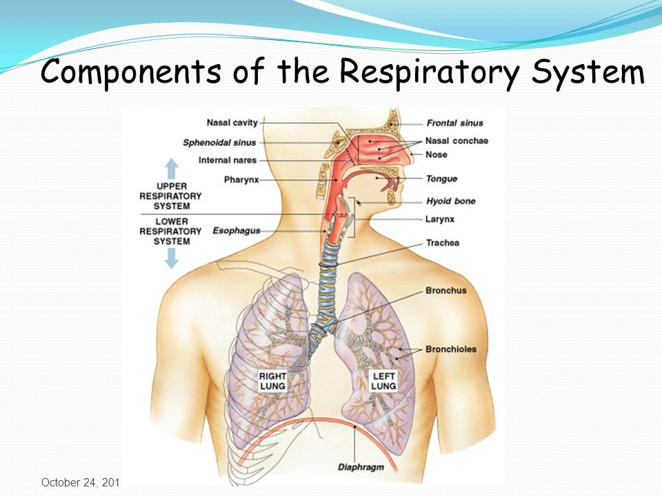 Introduction To Respiration Ppt Video Online Download