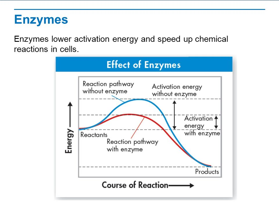 Chemical Reactions and Enzymes - ppt video online download