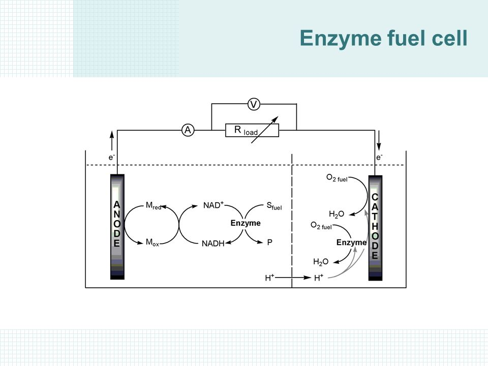 fuel cell electric wiring diagram enzyme engineering 4. enzyme reaction kinetics - ppt download