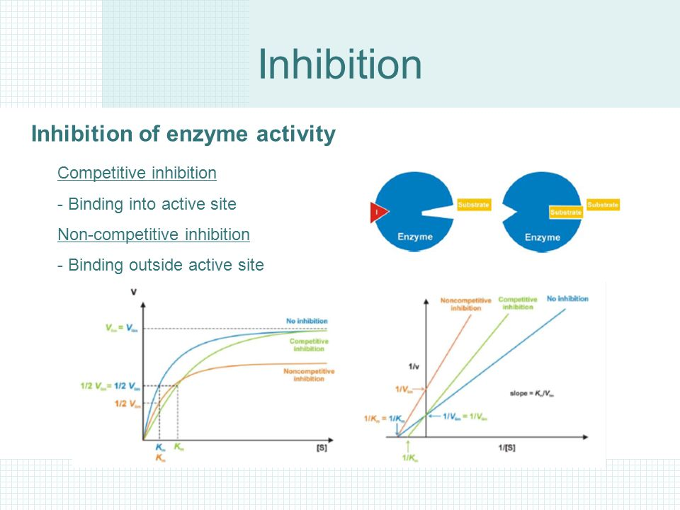 enzyme activity coursework