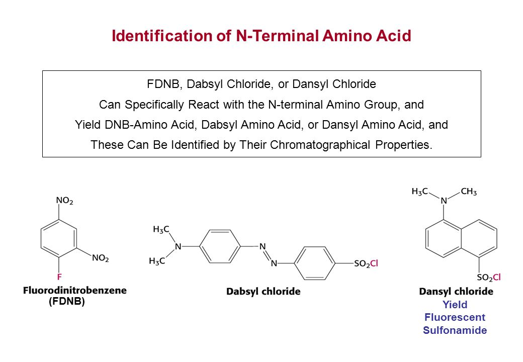 identification of amino acids Full-text paper (pdf): identification of the amino acids 300–600 of irs-2 as 14-3-3 binding region with the importance of igf-1/insulin-regulated phosphorylation of ser.